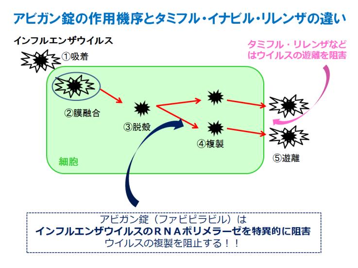 抗RNAウイルス薬の模式図